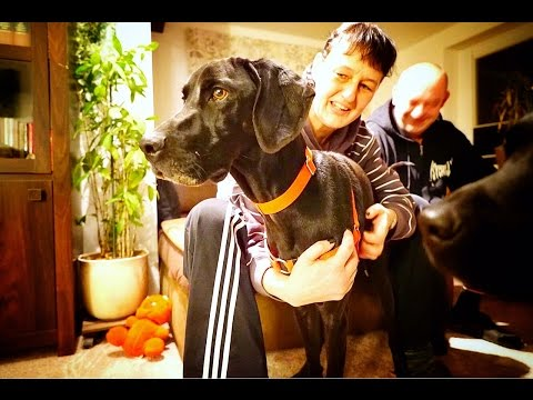 DOG ABANDONED BECAUSE HE IS BLACK jumps on a plane and leaves the country *BLACK DOG SYNDROME*