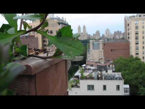 Urban Geography Intro