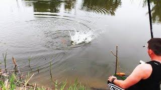 вот ЭТО ОН КЛЮНУЛ САЗАН НА ВЕЧЕРНЕЙ РЫБАЛКЕ рыбалка в мае 2019