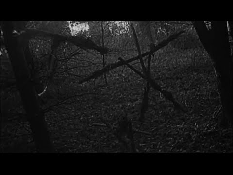 The Blair Witch Project 30 July 1999,