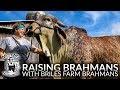 Brahmin girl's reply to anti Brahmin anti India propaganda video