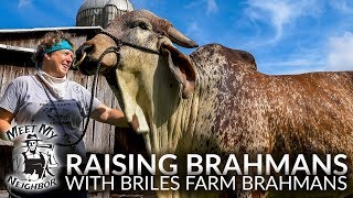 Raising Brahman Cattle with Briles Farm Brahmans (Meet My Neighbor)