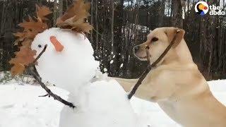 Dog HATES Snowmen | The Dodo