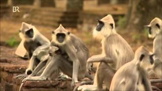 Reisereportage: Sri Lanka (1 von 2)