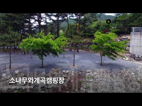 [CampingView 캠핑뷰] 소나무와계곡캠핑장