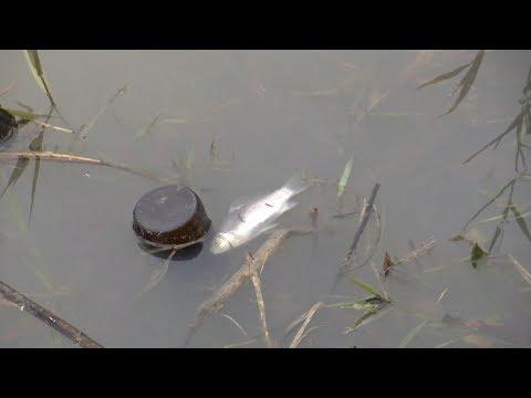 «Горячая линия»: в Кореновском районе пересыхает река Кирпили