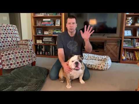 Reuben the Bulldog: Massage Therapy