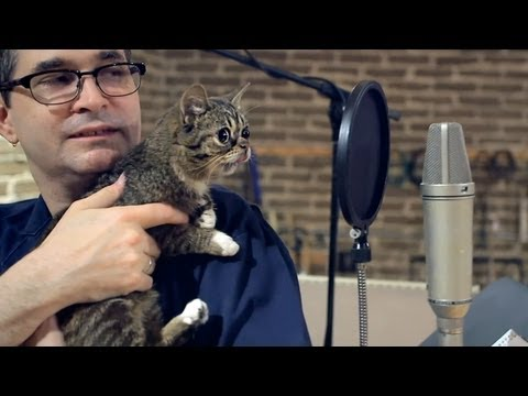 This Is What Happens When Lil Bub And Steve Albini Team Up To Tape TV Show (PHOTO, VIDEO)