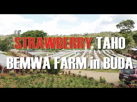 BEMWA FARM in DAVAO (BUDA), MINDANAO ADVENTURE Exploring Philippines!!!  RealLEE Vids