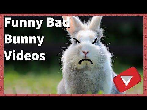 Cute Mean Bunny Compilation [2017] (TOP 10 VIDEOS)