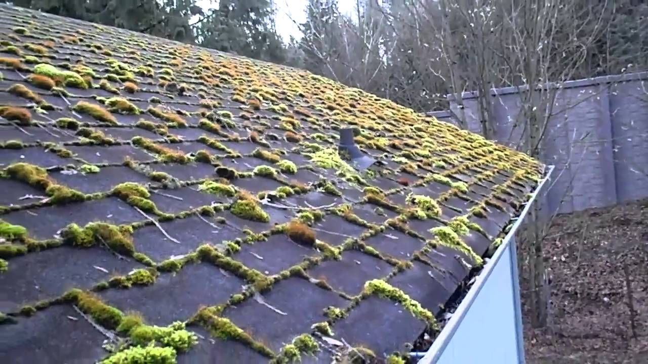 Home Inspection In Seattle Shows Roof Moss How To Control