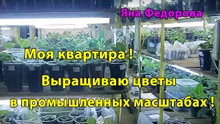 Моя квартира ! Вирощую квіти в промислових масштабах ! Такого ні в кого немає !