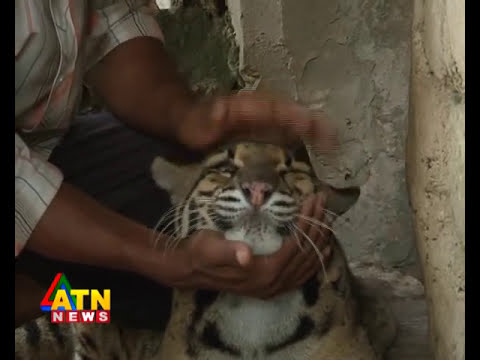 wildlife News of Safari park, Cocxbazar, Bangladesh-clouded leopard
