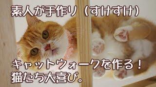 手作りキャットウォークを作ってみたら猫達大喜び'I handmade the catwalk.'