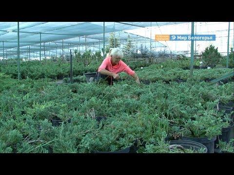 Какие зарплаты платят белгородцам