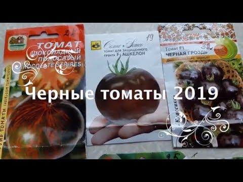 КАКИЕ ЧЕРНЫЕ ТОМАТЫ ПОСАДИТЬ в 2019? ОБЗОР № 3 черных томатов. ТопСад