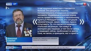 Специалисты проводят проверку после сообщений о появлении медведей на трассах Кузбасса