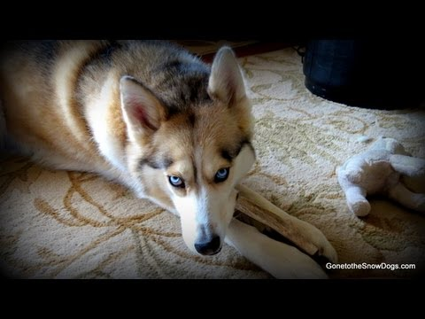 Can I work Full Time and Have a Puppy? FAN FRIDAY #103