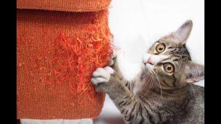 Домашние вредители Подборка смешного видео с котами для хорошего настроения