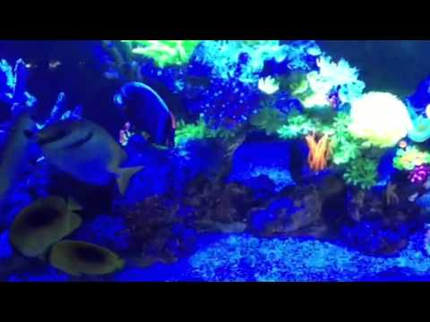 Fish only saltwater tank lit with blue light youtube for Fish only saltwater tank