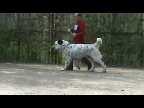 среднеазиатская овчарка кобели в ринге движения 03.05.2009 Луганск