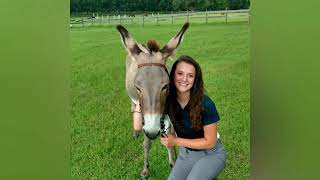 Wild Donkey Reunited With Her Baby in New Home