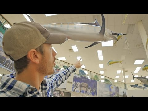 Amazing Fish Mounts in Texas Tackle Store