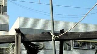 風力發電DIY