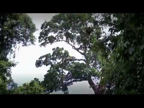 Ghana: reforming forestry industry