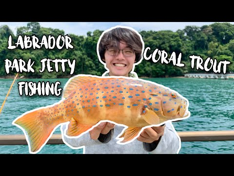 Labrador Jetty Fishing: Coral Trout (Grouper) | Catch And Cook | Fishing In Singapore