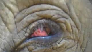 Elephants blinkin