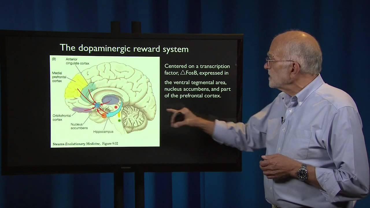 9.2 - Mental disorders: Drug addiction