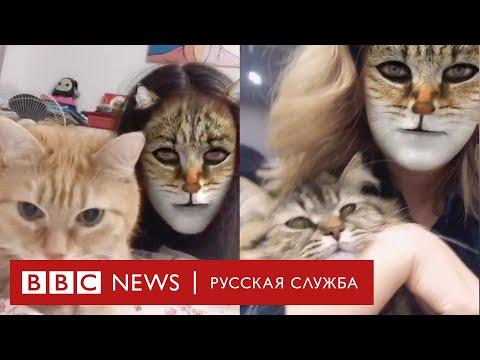 Боятся ли коты фильтров с кошачьими мордами?