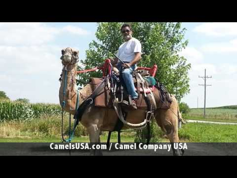 Entertainment Rental, Camel Rental, Animal Rentals Chicago, Fun Party Rentals, 5