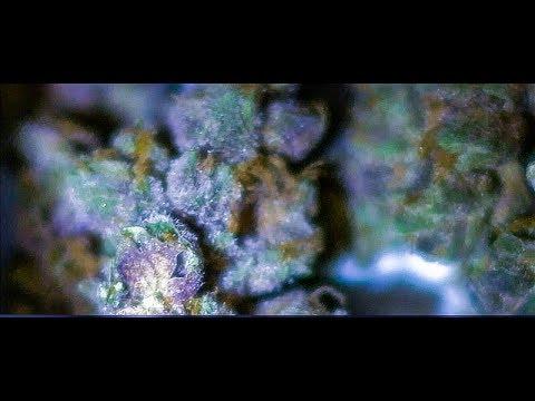 Florida Medical Cannabis (Trulieve - Strawberry SwitchBlade Truflower)