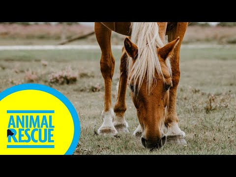 Animal Rescue - Season 2, Episode 16