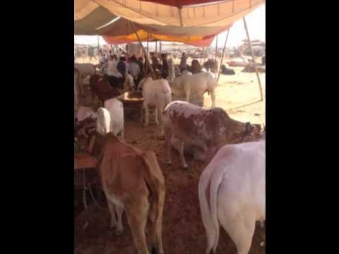 Orphans Around the World- qurbani 2012 Travel Video