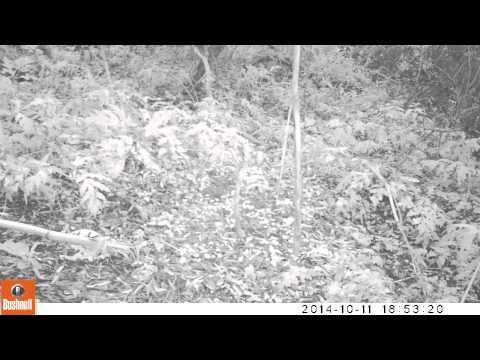 Onbekende vogel op cameraval