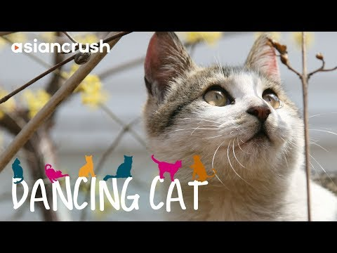 Dancing Cat | Full Movie [HD] | Korean Cat Documentary full movie | watch online