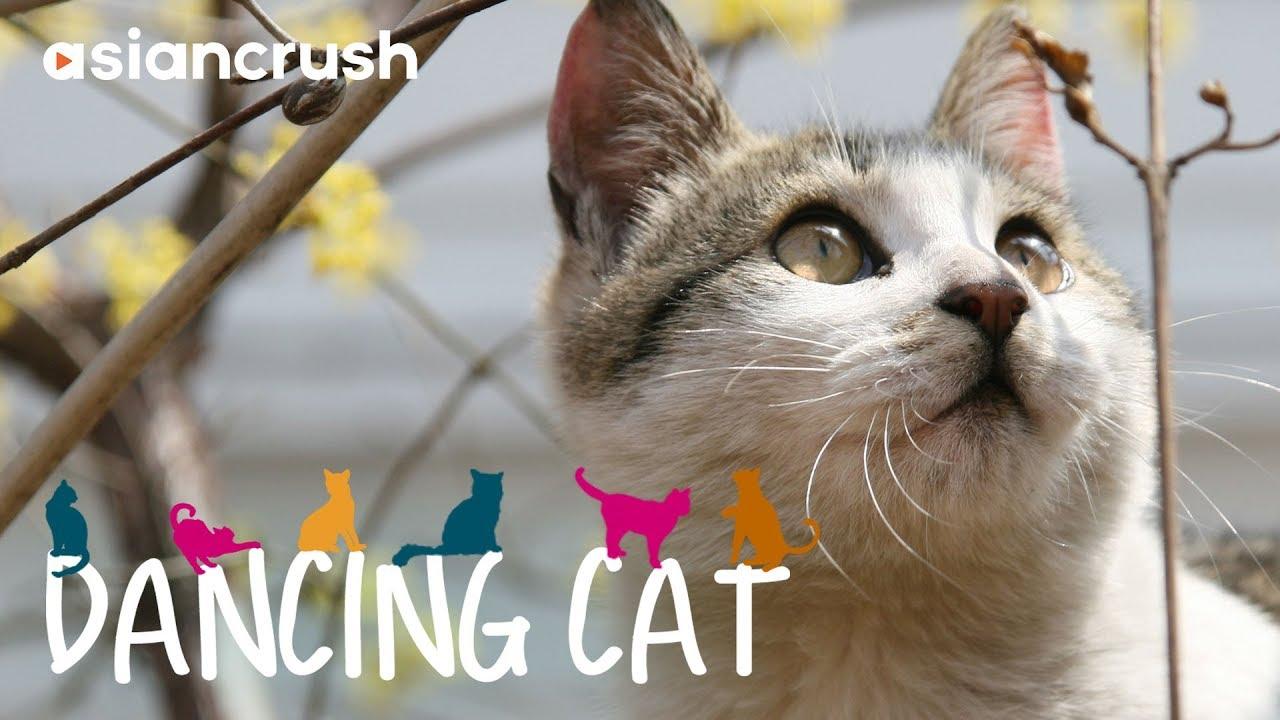 Dancing Cat | Full Movie [HD] | Korean Cat Documentary