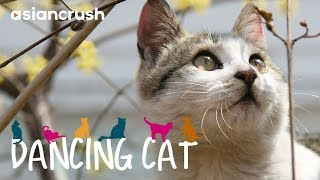 Stray cats in Seoul fight for survival and nap time | Full Documentary 'Dancing Cat'