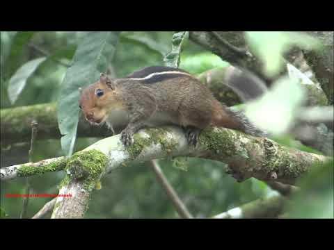 Squirrel Sound