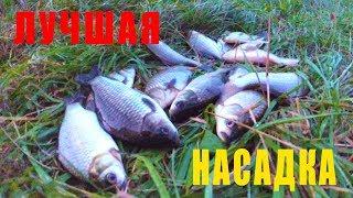 Ловля КАРАСЯ на ПЕРЛОВКУ С ЧЕСНОКОМ. Рыбалка на ПОПЛАВОЧКУ