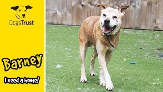 Barney the Crossbreed is Looking for a Forever Home! | Dogs Trust Manchester