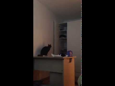 FUNNIEST CAT FAIL 2015 – NEW VINE