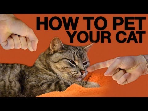 How To Pet Your Cat