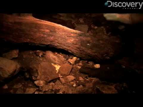 Caves Reveal Hidden Creatures