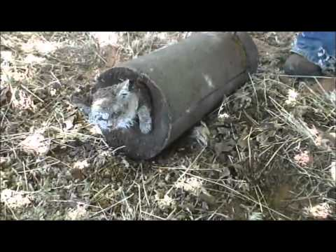 (WARNING: GRAPHIC VIDEO) Cat Buried Alive In Concrete A Warning Message From Polygamists?