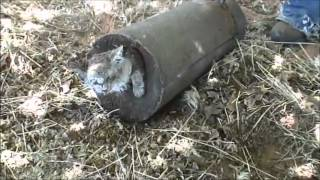 Repeat youtube video (WARNING: GRAPHIC VIDEO) Cat Buried Alive In Concrete A Warning Message From Polygamists?