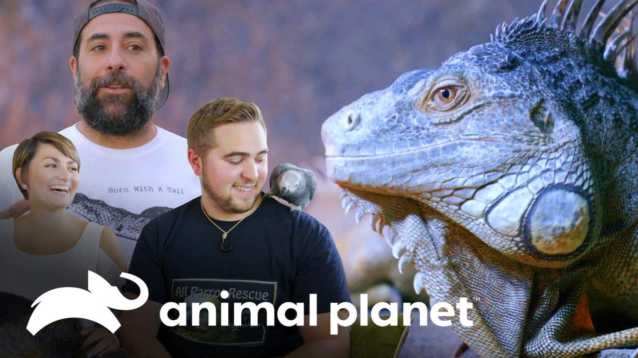 Esse casal tem praticamente um zoológico em casa! | Um Lar para Pets | Animal Planet Brasil
